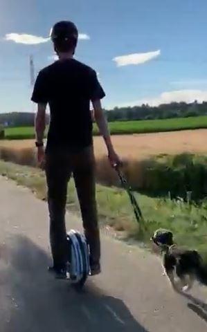Gyro chien.JPG